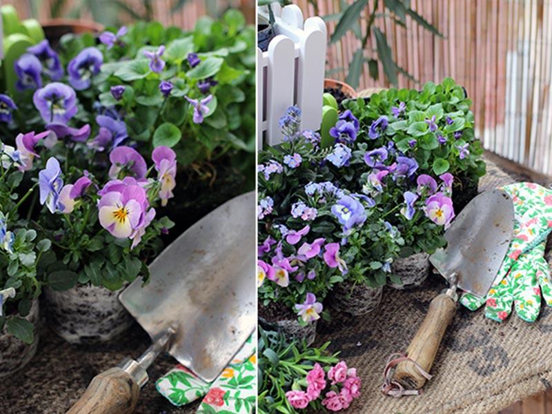 Jetzt Wird's Bunt! Balkon Bepflanzen Im Frühjahr ? Emsa Fruhjahr Blumen Balkonkasten Pflanzen