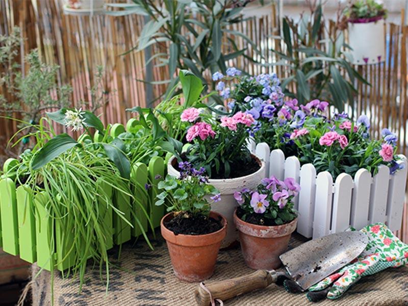 jetzt wird s bunt balkon bepflanzen im fr hjahr emsa. Black Bedroom Furniture Sets. Home Design Ideas