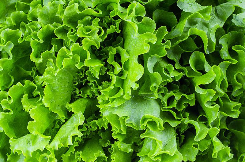 salat aufbewahren leicht gemacht knackig statt schlapp emsa. Black Bedroom Furniture Sets. Home Design Ideas