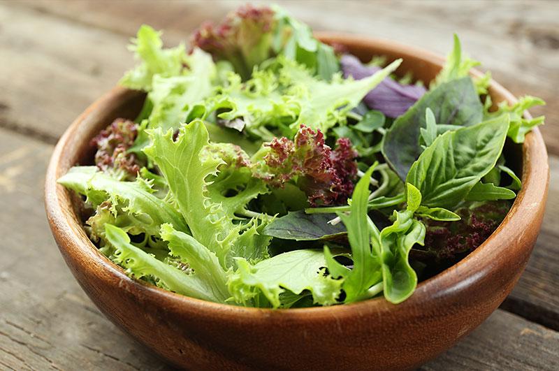 knackig statt schlapp salat aufbewahren leicht gemacht emsa. Black Bedroom Furniture Sets. Home Design Ideas