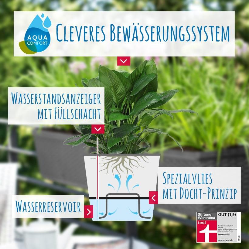 Pflanzenpflege im Urlaub – so geht's! – Bild 1
