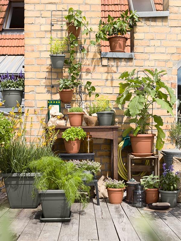 die pflanzentrends 2018 f r den balkon emsa. Black Bedroom Furniture Sets. Home Design Ideas