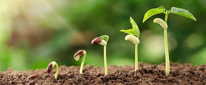 Schnell wachsende Gemüsesorten