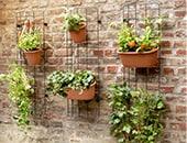 Garten- und Balkonpflege