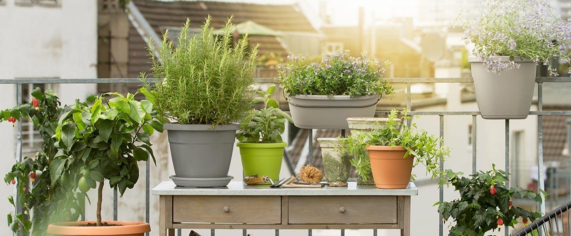 Jetzt wird's bunt! Balkon bepflanzen im Frühjahr
