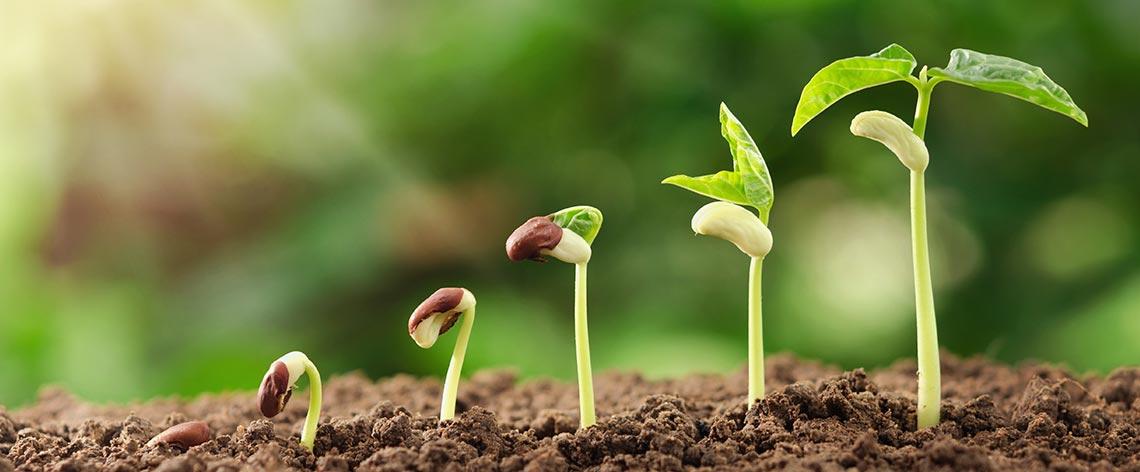 Schnell wachsende Gemüsesorten (Anbau im Juli)