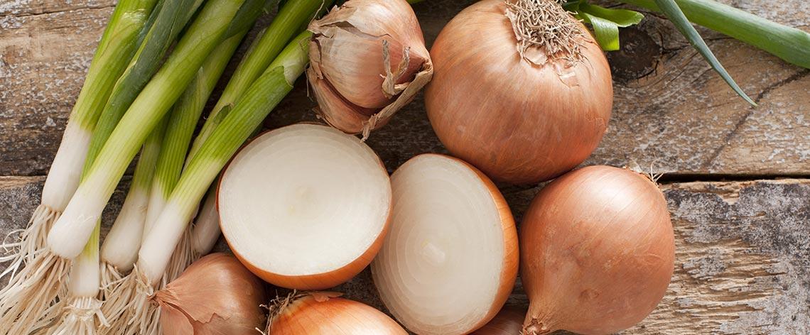 So werden Zwiebeln richtig gelagert